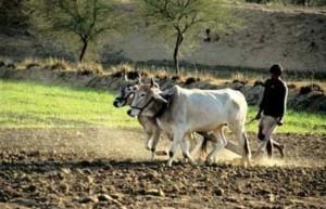 Indian_farmers8-300x193