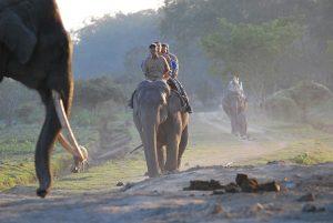 1024px-Pobitora_Elephant_ride_3