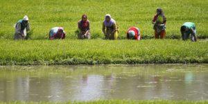 4835844_3_9972_des-ouvriers-agricoles-travaillent-dans-une_6a3d182723d5f7fd93f37d75f58af2c7