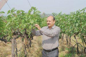 En-Inde-Neeraj-Agarwal-viticulteur-jongle-avec-des-pluies-capricieuses_article_main