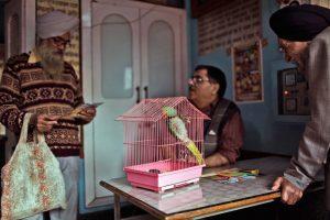 l-hopital-de-delhi-un-paradis-pour-les-oiseaux,M288343