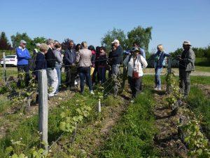vignoble de Jasnieres